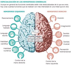 cerebro hmisferios